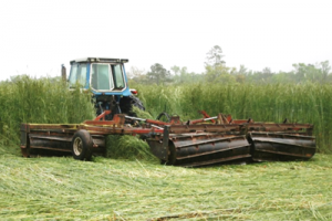 High-residue Cover Crops